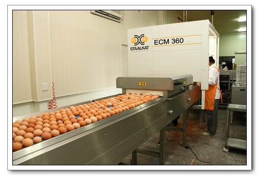 雞蛋全面洗選 從消費端推動