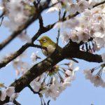 「餵食野鳥的影響與研究」之專家意見